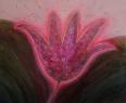 Gilgamešův květ / 2008 olej 75 x 90 cm - prodáno