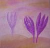 Ocún bledý / 2009 olej 50 x 50 cm - prodejné