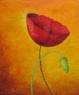 PapaVera mákovitá / 2009 olej 50 x 60 cm
