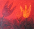 Tulipa Stephanus